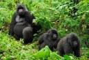Visit Rwanda's Top National Parks
