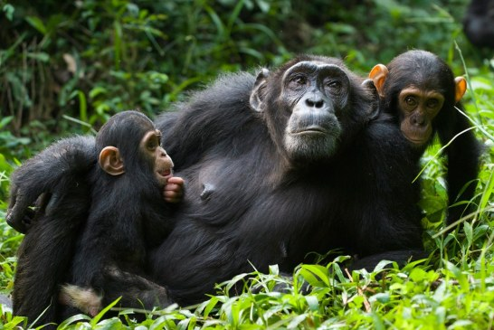 Gorilla and Wildlife Safaris in Uganda