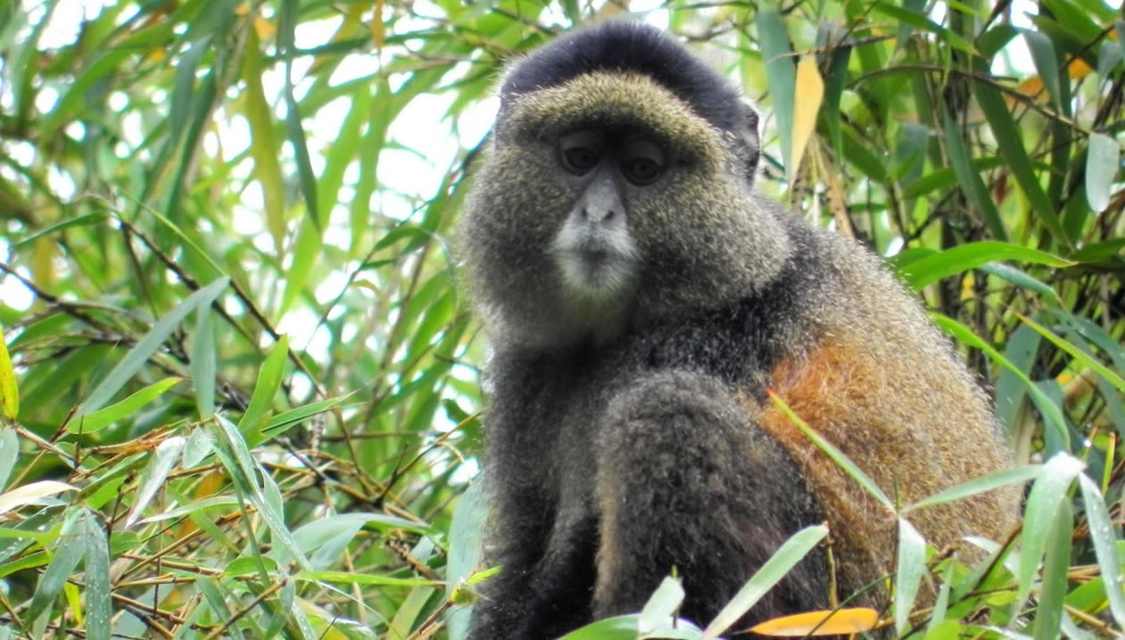 Rwanda Primates Safaris and Beach Holidays