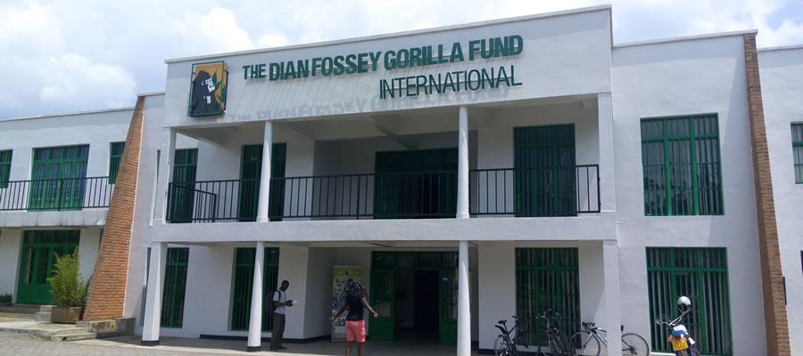 Dian Fossey Gorilla Fund