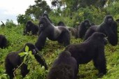 Remarkable Places to Visit on Safari in Rwanda
