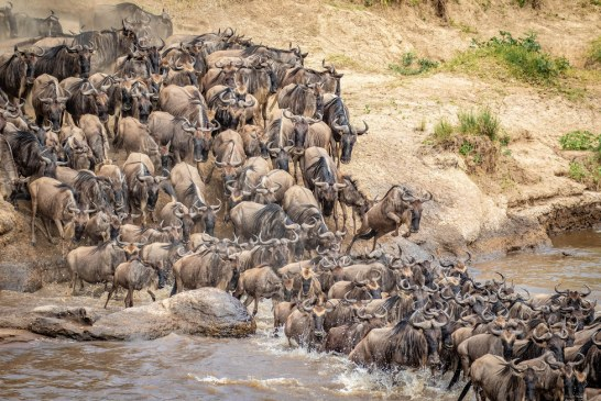 Best Time to Visit Maasai Mara National Park