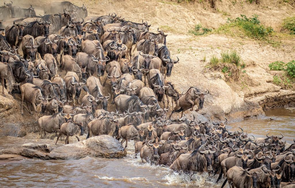 Best Time to Visit Maasai Mara National Park