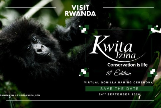 Kwita Izina 2020: Arsenal Players Names Rwanda Baby Gorillas